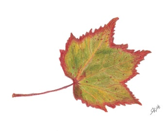 "Autumn Leaves -Red Maple Leaf Print - 5"" x 7"""