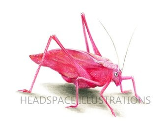Pink Insect Katydid Bug Art Print by Headspace Illustrations
