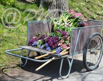 Flower Cart of Hyacinths Photo, Flower Photography, Fine Art Photography, Purple, Landscaoe Photography, Wall Art, Home Decor, Office Decor