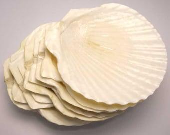 Scallop Shells Retro Seafood Platters