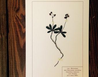 Herbarium 24