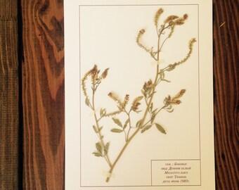 Herbarium 26