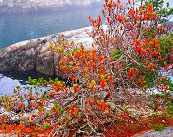 Smuggler's Cove, Nature Digital Print