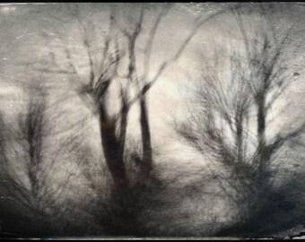 Barren Tree Landscape
