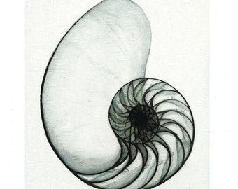 Nautilus Print of handmade pen on canvas