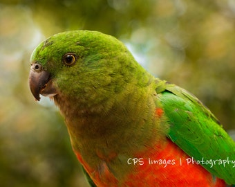 PARROT - Digital Photograph, Digital Download, Instant Download, Photography, Print, Wall Art, Nature, Bird