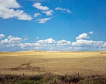 Wheat Fields, Field, Photogrpahy Print, Print, Blue skies