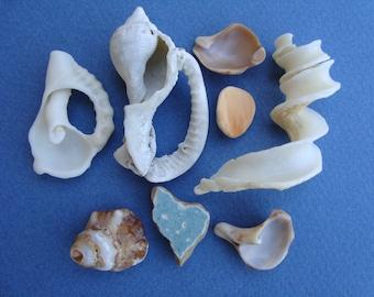 Fragments of sea shells-italian sea shells-supplies-worldwide seashells-mix-# 045