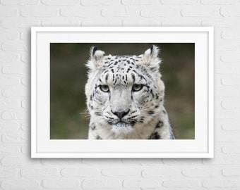 White Tiger Art Photo With Frame