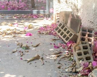 Blossom and Bricks - travel photography, Greece, C-Type print