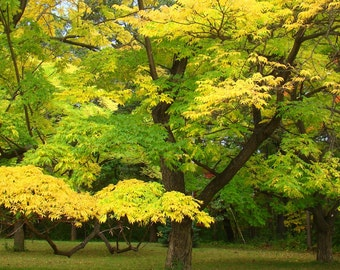 Yellow Green trees