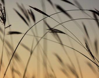 Sunset grass silhouette 3