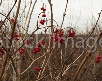 Digital Download, Berries Photography, Nature Photography, Berries, Stock Photography, Royalty Free Photo