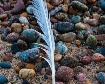 Beach Feather: WALL ART Fine Art Photography Bird Feather Beach Sand Rocks Blue Purple Pink Color Ocean Coastal