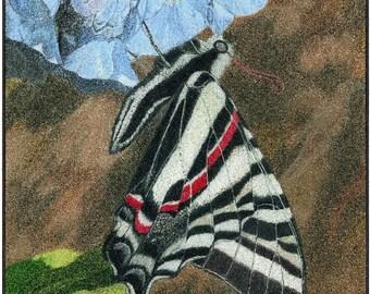 Zebra Black Swallowtail