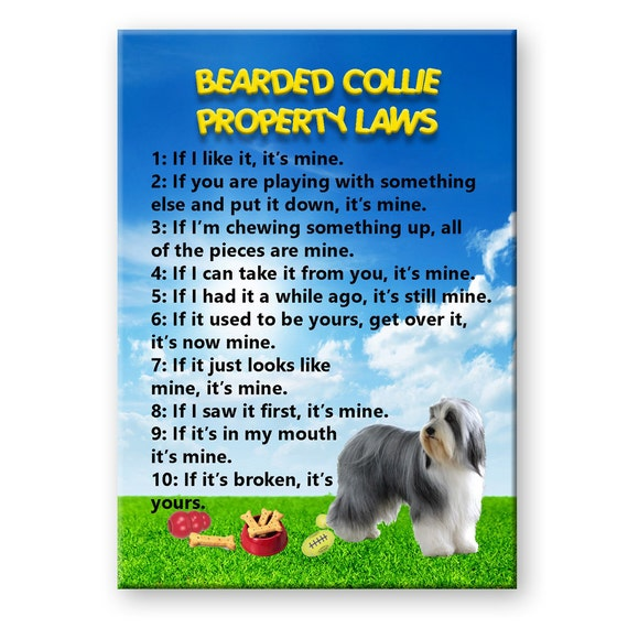 Bearded Collie Property Laws Funny Fridge Magnet