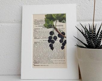 Antique Cookery Book Art Print - Blackcurrant Botanical Image - Mrs Beetons Recipe Book Kitchen Decor - Literary Print - Dictionary Print