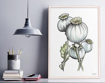 Botanical Art Print, Poppy Seed Heads, Illustration