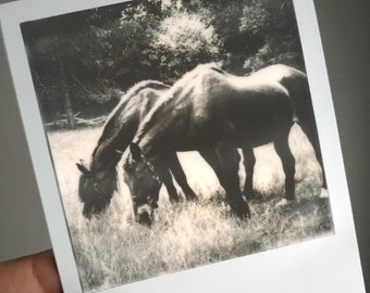 Grazing Ponies, Polaroid Photographic Print, picture of horses, OOAK Ready to Frame, one of a kind polaroid