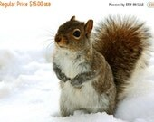 40% OFF SALE Squirrel Animal Photography, Nature Photograph, Squirrel Picture, Grey, Brown, White, Winter, Snow- 5x7 inch Print -I Would Lik