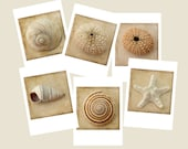 Seashell Card Set, Nautical Greeting Card Set, Six Sepia Photo Cards, Blank Cards, Beach Card Set, Sea Shell Cards, Sea Urchin, Star Fish