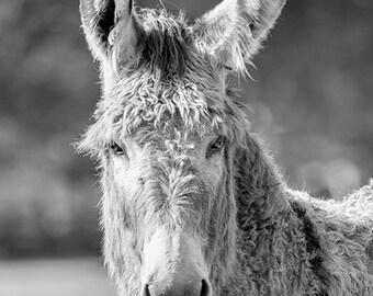 Animal Photography, Donkey Photograph, Burro, Equine, Farm Animal Art Print, Black & White Print, Monochromatic, Animal Wall Decor - Benny
