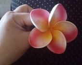 pluemria
