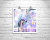 Nature Picture, Hummingbird Art, Pastel, Bird Photography, Square, Bird in Flight, Fine Art Print