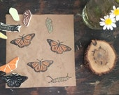 Monarch Butterfly Life Cycle Rubber Stamp Set