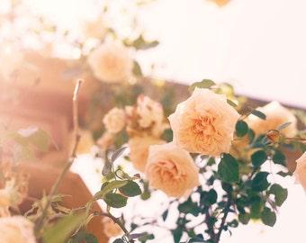 Nature Photography - Antique English Garden Roses Print Peach Wall Decor Flower Floral Art Nature Photo Romantic Home Cottage Summer Decor