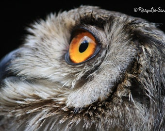 Owl, Owl Photo Nature Photography, Owls Nature Picture, Grand-duc Owl, Bird Photography, Instant Download Digital File