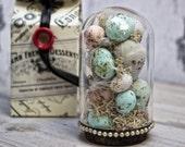 Robin Eggs Sculpture in a Glass Bell Jar Victorian Cloche Home Decor Miniature
