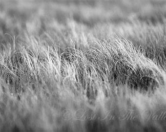 Beach Grass Photo, Fine Art Photography, Beach Photography, Nautical Decor, Coastal Photograph, Black and White Photography, Wall Art, Grey