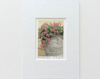 Miniature Matted Geranium Art,Pink Geranium Flowers,Flower Photography,Italian Garden Photography,Tuscany Italy Photography,Flower Art Print