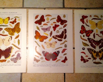 1947 Butterflies, Chiefly European Vintage Illustrations