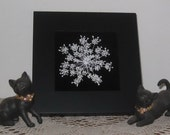 Pressed Queen Annes Lace on black velvet in 7.5 inch black wood frame