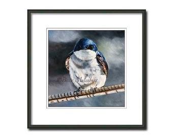 bird tree swallow S/N LE PRINT wildlife nature