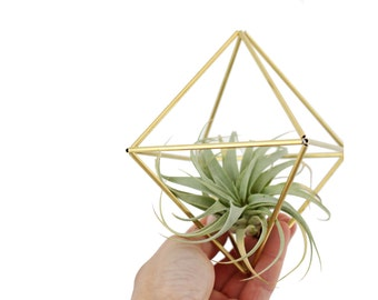 IRE - Modern Geometric Ornament - Himmeli - Air Plant Holder