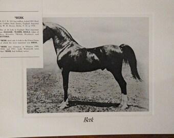 Vintage Crabbet Arabian Horse Art Print - Berk