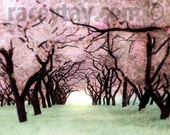 Black Friday, Girl Nursery Decor, Pink, Green, Nature Photography, Cherry Trees, Purple Pink, Spring, Pastel