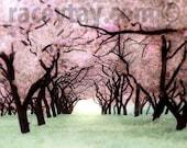 Pink Purple Mint Bedroom Wall Art, Cherry Blossoms Tree, Spring, Baby Girl Nursery Decor