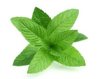 Peppermint Fragrance Oil 1 ounce