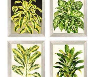 Vintage botanical foliage leaves with Instant Download 3-[8x10]  Files Vintage print Botanical Print Antique Botanical Prints  Posters