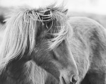 Modern Horse Photography in Black and White