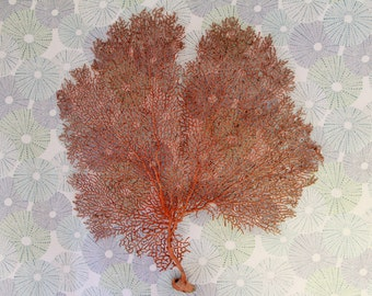 Orange/Brown Fan Coral - 10
