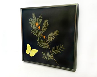Framed Botanical and Preserved Butterfly Mount - Partridge Pea and Cloudless Sulphur Museum Display Shadowbox