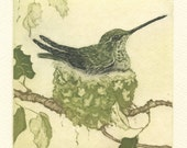 Anna's Hummingbird Nest, Fine Art Etching -reserved for Noreen