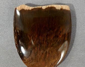 Mystery Petrified Wood Cabochon