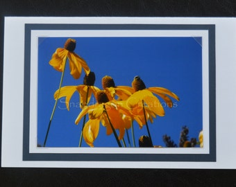 Photo Greeting Card, Yellow Coneflowers against Blue Sky, Blank Inside