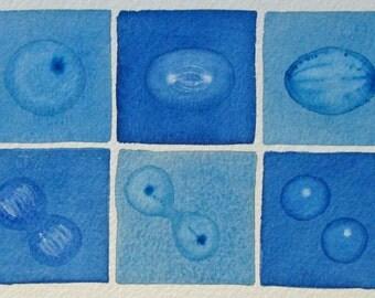 Mini Blue Mitosis  - original watercolor - cell cycle